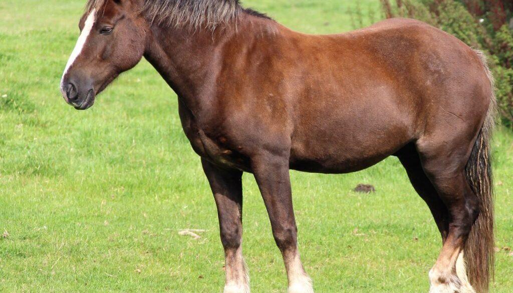 A single horse